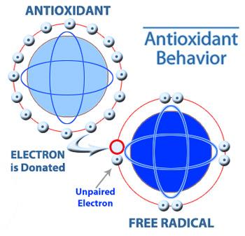 antioxidant-c60